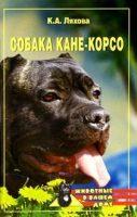 Собака Кане-Корсо
