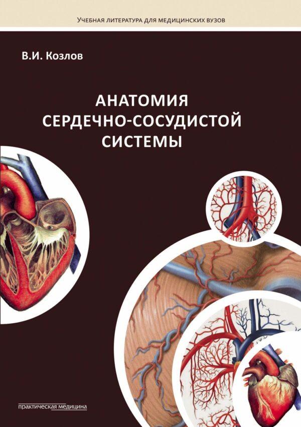 Анатомия сердечно-сосудистой системы