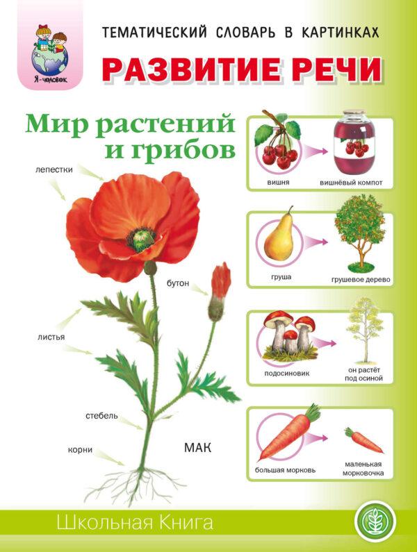 Развитие речи «Мир растений и грибов»: Фрукты. Овощи. Ягоды. Грибы. Цветы. Деревья
