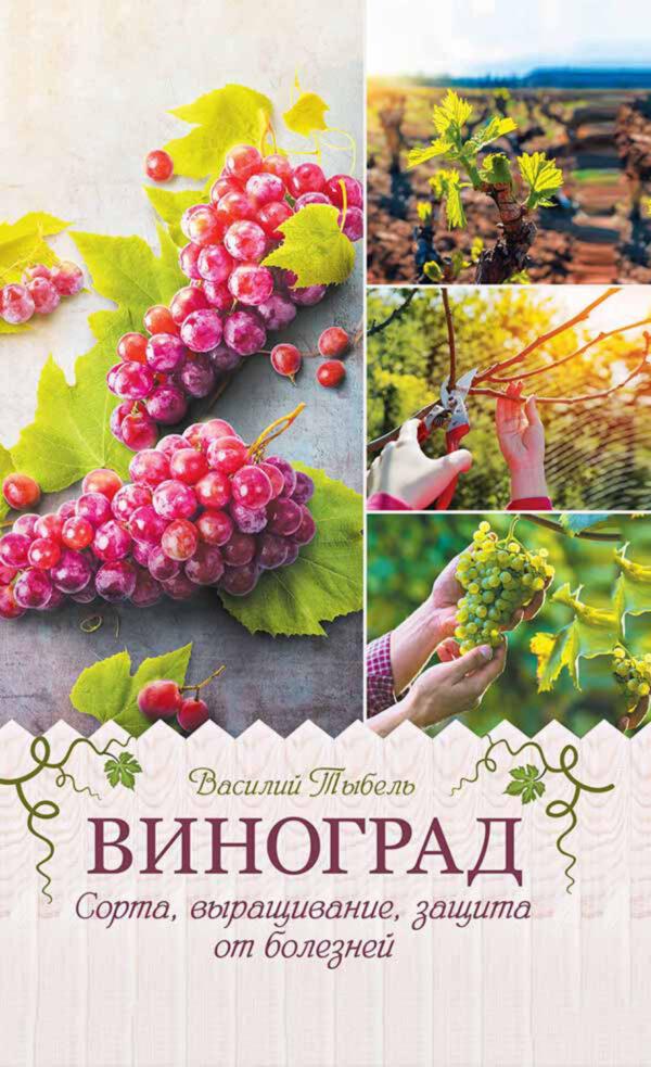 Виноград. Сорта